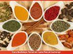 Cara Budidaya Tanaman Lada Panjat (sahang)