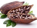 Cara membudidayakan tanaman Kakao