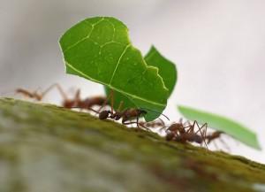 fakta-tentang-duna-semut