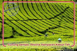 Gunung Dempo, Pesona Hamparan Kebun Teh