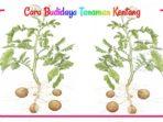 Jenis-jenis Hama dan Penyakit pada tanaman kentang