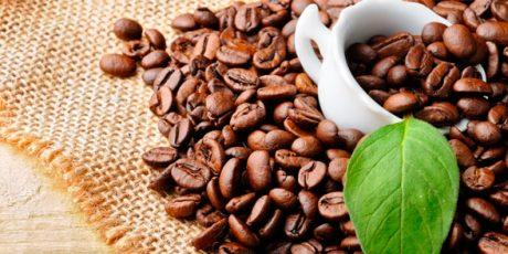 Cara Budidaya Tanaman Kopi (coffee)
