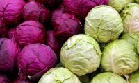 Cara Pengendalian Hama & Penyakit pada tanaman sayur kubis (KOL)